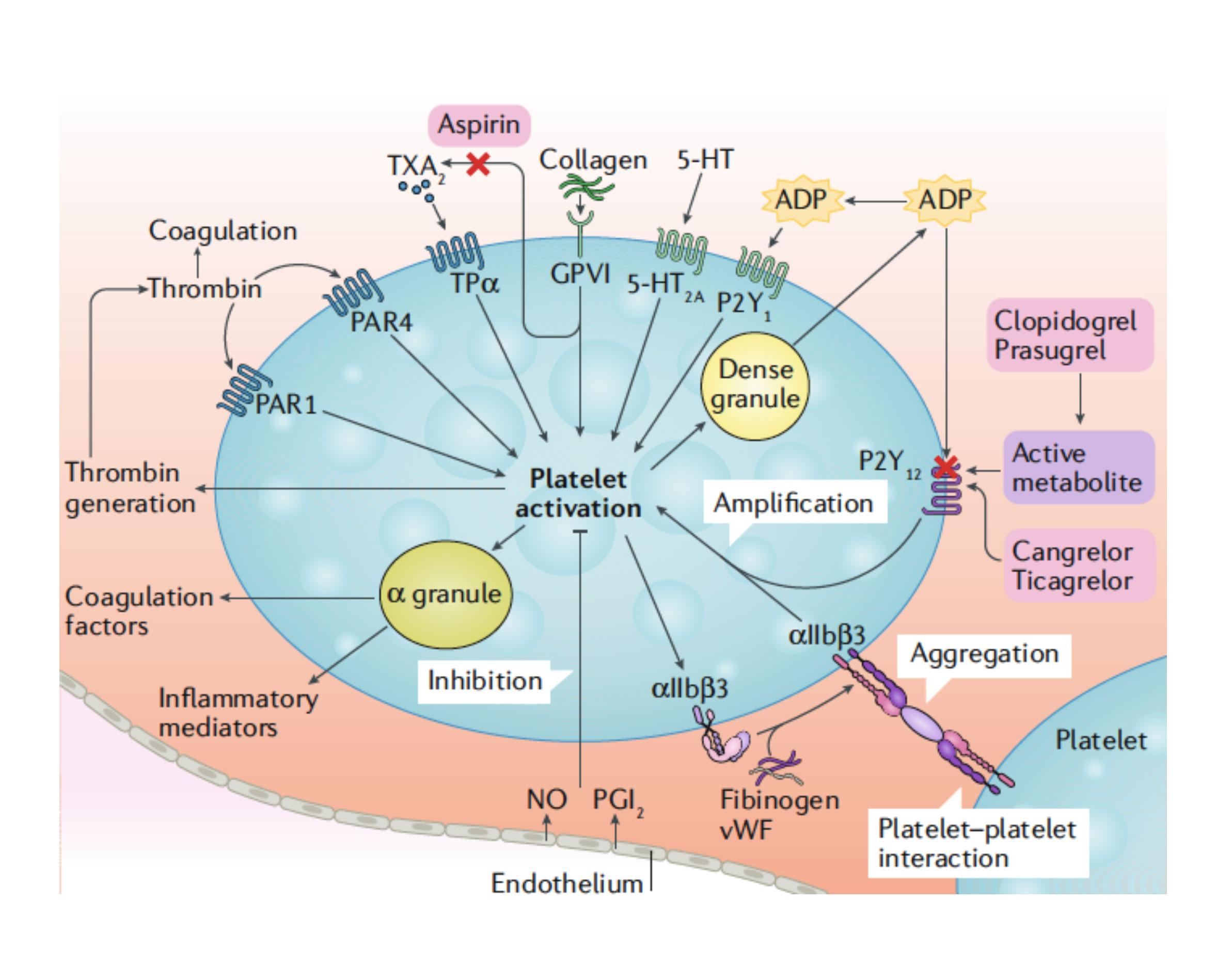 5 asa terapia para la diabetes